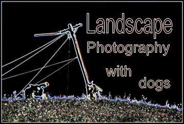 image for Landscape Photography With Dogs